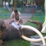 Elefant-waschen-150x150