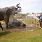 ElefantenAussen2-voyage-150x150