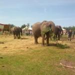 ElefantenAussen3-voyage-150x150