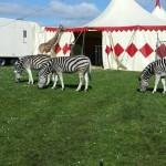 ZebrasGiraffe-voyage