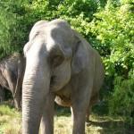 charles-knie-elefanten-150x150