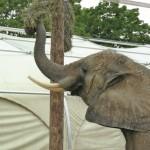 elefantkratzb-150x150