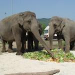knie-elefanten