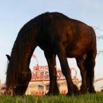 knie-pferd