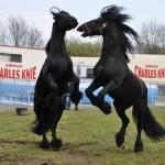 pferde-knie-150x150