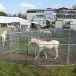 pferdeführanlage2-150x150