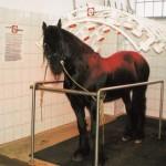 pferdesolarium2-150x150